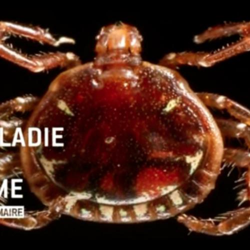 La maladie de Lyme | France 5 | 18 septembre 2012